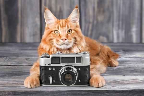 А вы что думаете о 21 этапе фотоконкурса?