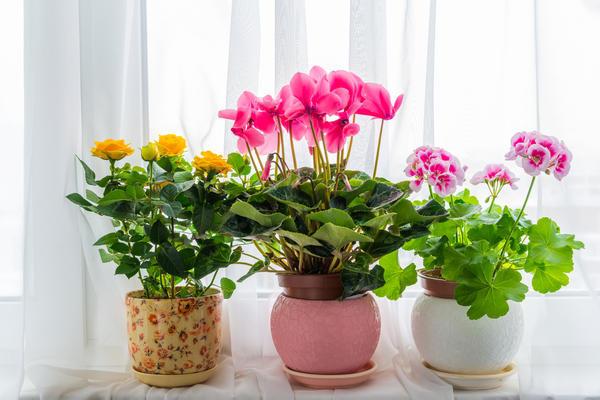 Комнатные растения - это лето круглый год