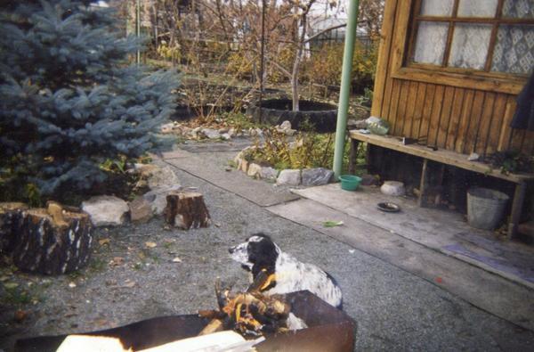 Мой садовый участок