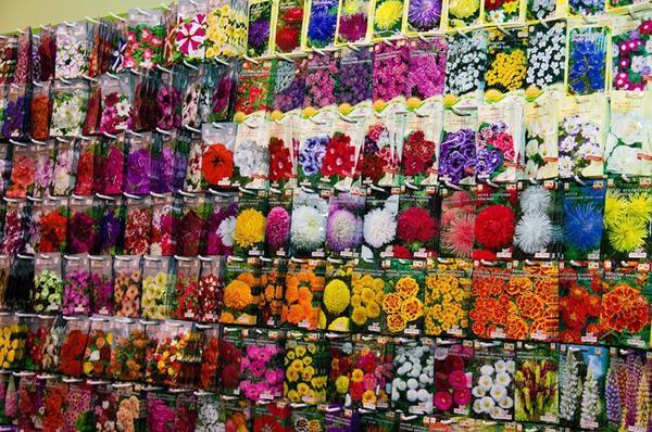 Оставьте свой отзыв о семенах этого производителя! Фото с сайта flowers.flowers-expo.com