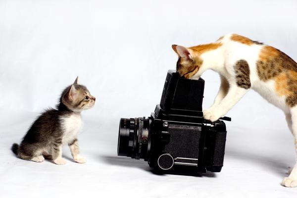 Стартовал весенний этап фотоконкурса