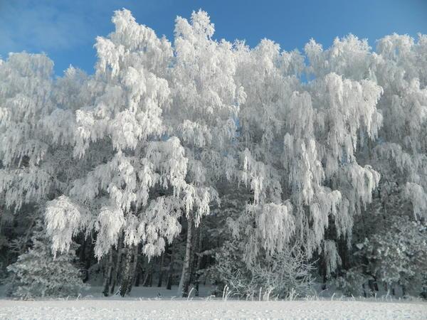 Зимнее очарование, Автор: user_2914