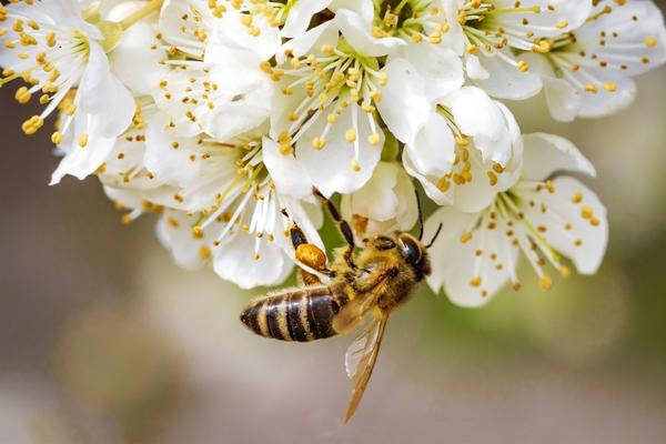 Фотомарафон Пчела на цветке
