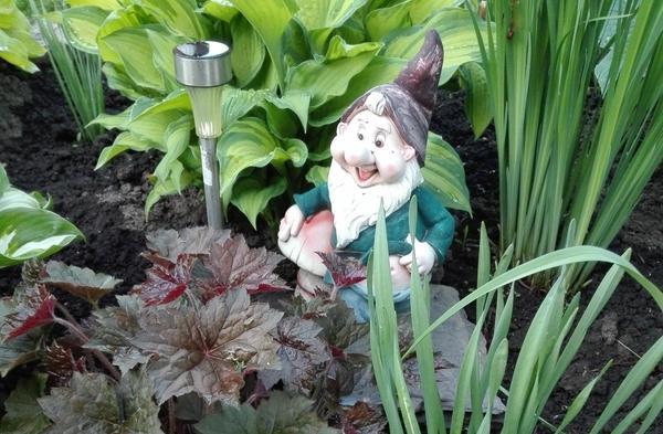 Мой сад. История