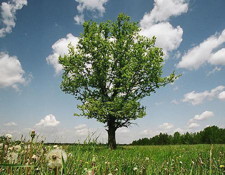"""Это """"Дерево в кадре"""""""