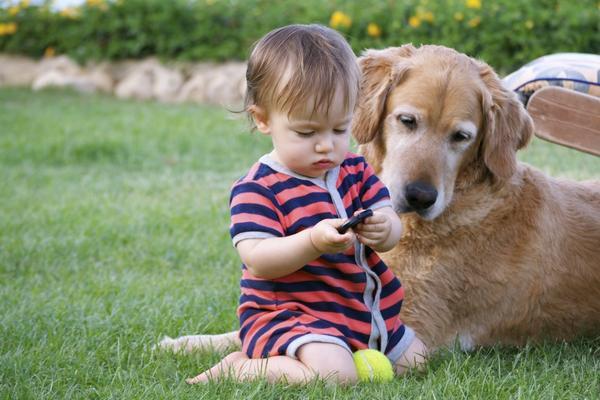 Фотогалерея Наши собаки на природе