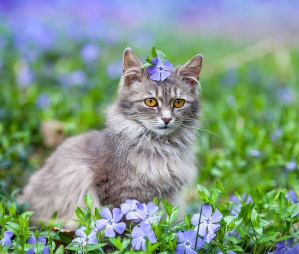 Фотогалерея Коты на природе