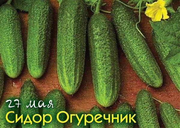 27 мая - Сидор Огуречник