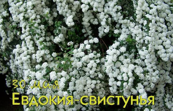 30 мая - Евдокия Свистунья