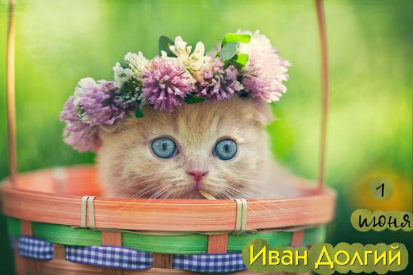 1 июня - Иван Долгий