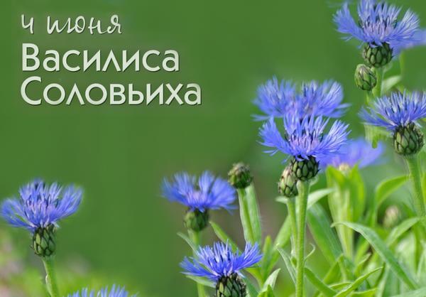 4 июня — Василиса Соловьиха Автор фото - Елена Раздолина (erazdolina)