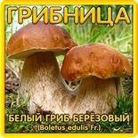Грибница Белый гриб Березовый