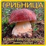 Грибница Белый гриб сосновый