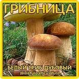 Грибница Белый гриб Дубовый