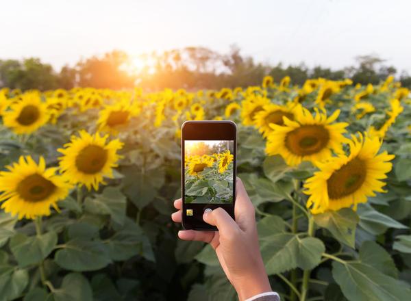 Начинаем осенний этап конкурса дачных фотографий!