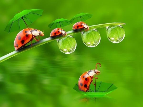 Территория зонта...