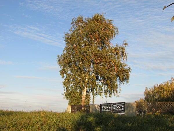 Вот это  - дерево, нет вопросов...