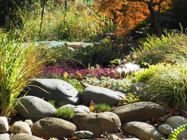 Наш любимый сад