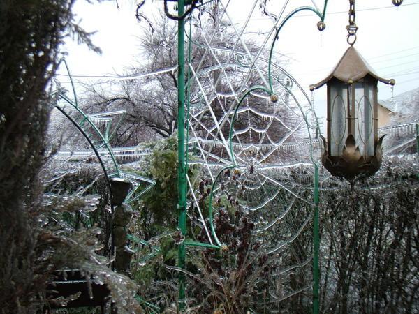 Наш сад - ледяная сказка