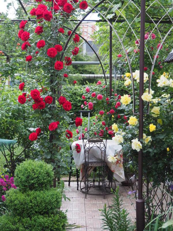 Наш сад находится рядом с домом,и является экспериментальным полигоном для нашего творчества.