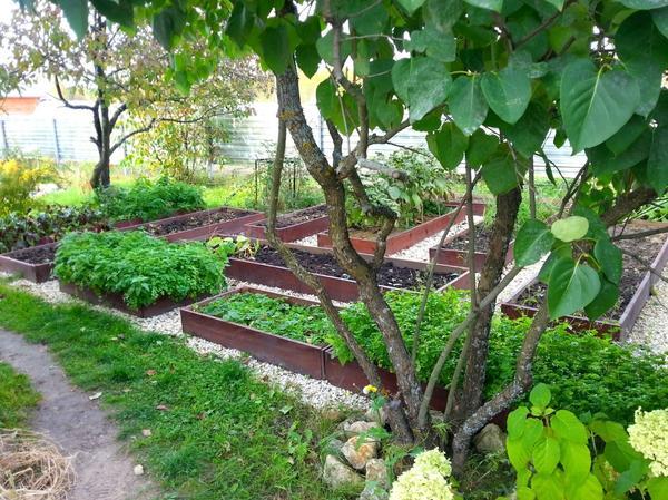 Огород в моем саду