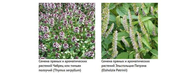 Из коллекции Анисимова Г.П.