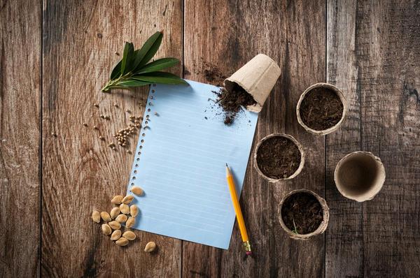 Как правильно выбрать или приготовить грунт для рассады?