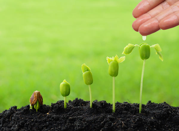 План тестирования семян Агроуспех