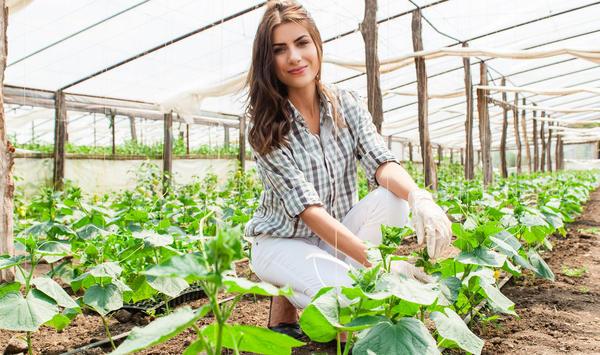 Объявляем набор группы тестирования семян огурцов фирмы Гавриш