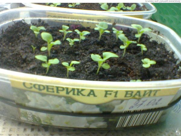Растениям две недели