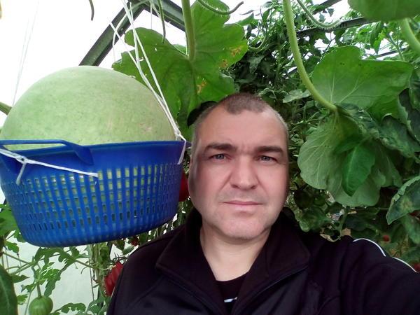 Мои арбузы