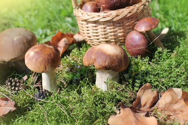 У кого такие грибы?