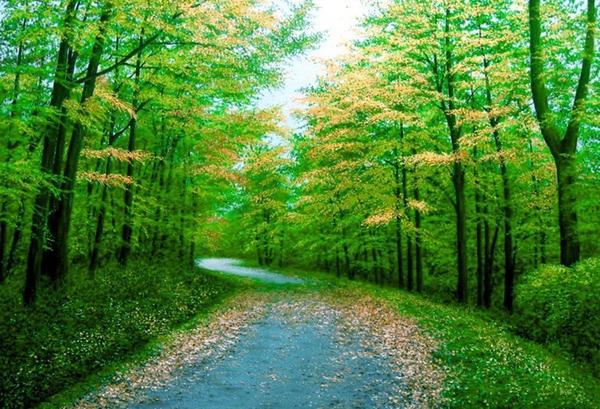 Осень... хоть и ранняя...