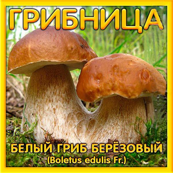 Посажу-ка я грибок - будет свой грибной лесок!