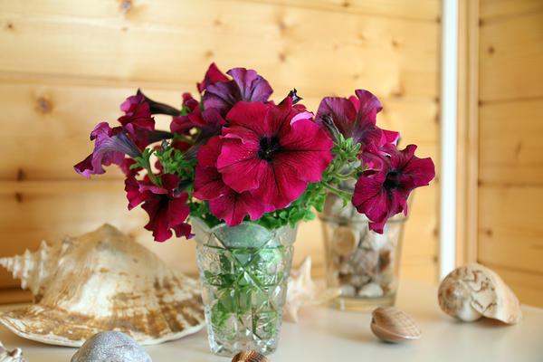 Комплиментуния Бургунди в вазе. Автор фото - Юлия (Innova)