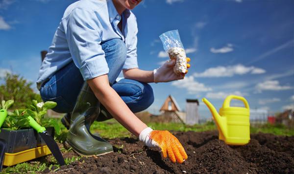 Объявляем набор группы тестирования семян овощей Агрофирмы АЭЛИТА