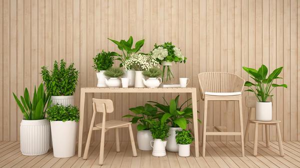 Конкурс домашних растений продолжается!