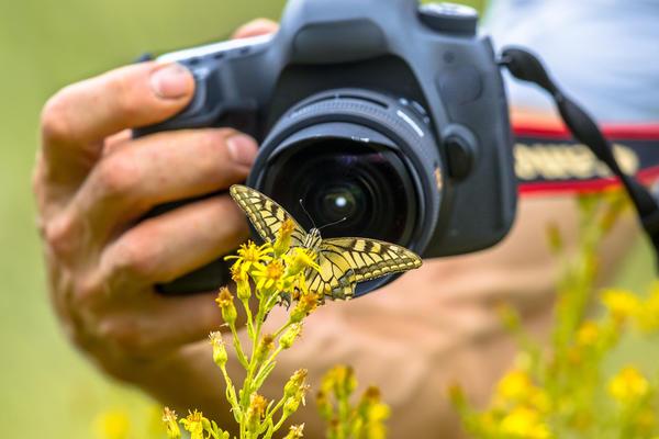 """Фотоконкурс """"Лето в объективе"""". Просьба помочь участникам конкурса определить названия растений и вредителей!"""