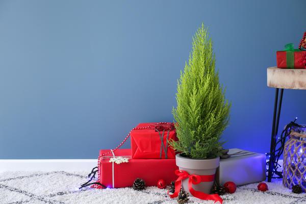 Кто пробовал такую елку потом сажать в грунт и что из этого вышло?