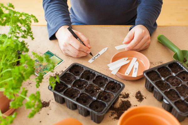 Что посеять в марте на рассаду?