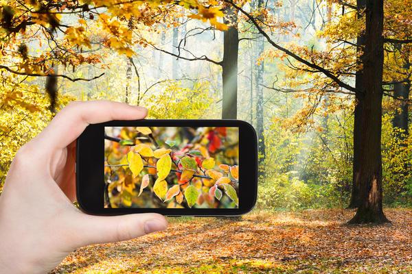 Как перенести фотографии с телефона на сайт