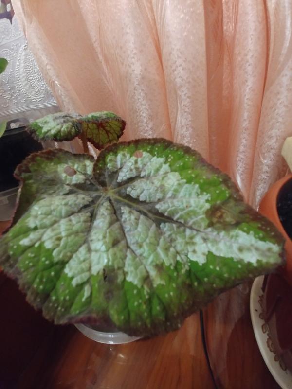 Помогите определить, что не так с растением?
