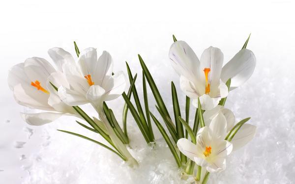 Поздравляем именинников марта!