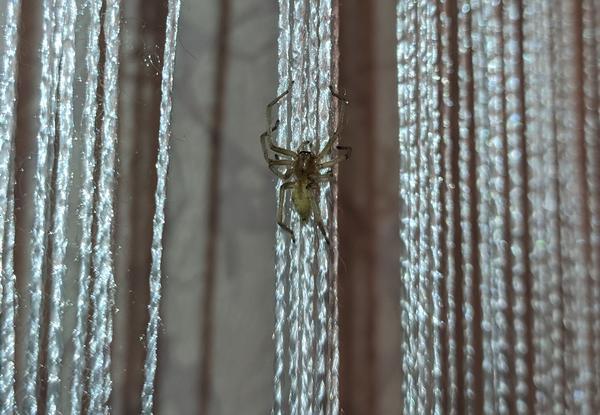 Вот этот паук