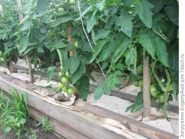 грядки с компостом