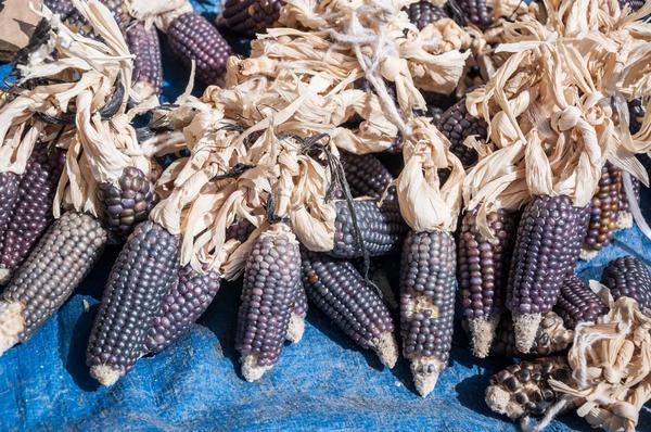 Черная кукуруза