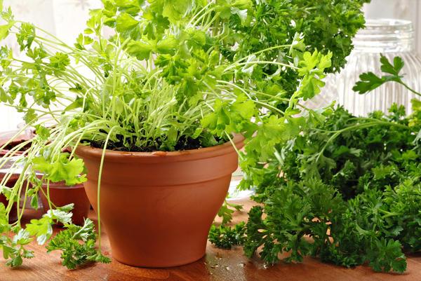 Свежая зелень - вкусное и полезное дополнение ко многим блюдам
