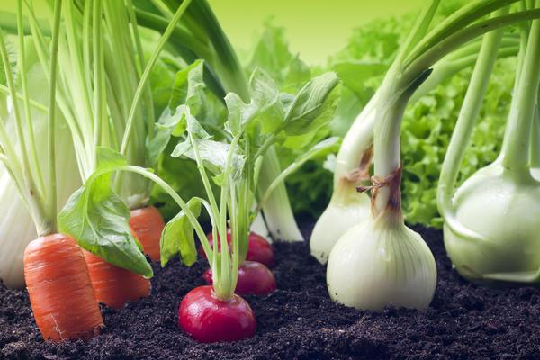 Декабрь - отличное время выбирать новинки, запасаться любимыми сортами овощей и цветов
