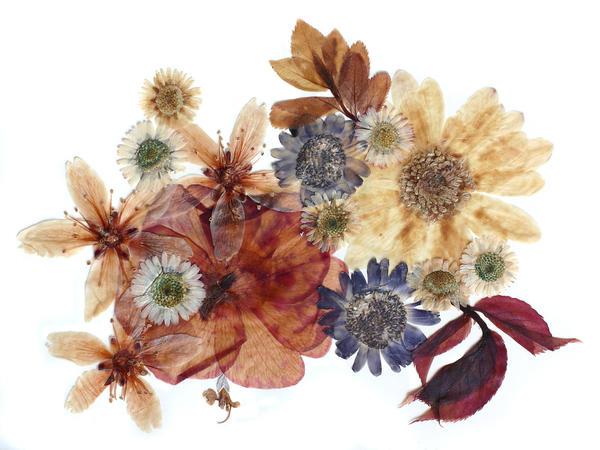 Ошибана — вид искусства, в котором вместо кистей и красок используются засушенные растения