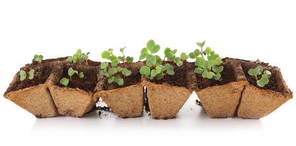 Чтобы уменьшить площадь выращивания, используйте рассадные кассеты с ячейками